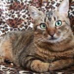 Was tun gegen Katzenurin?