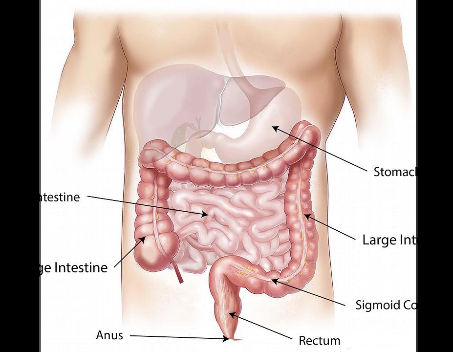 wie man schnell einen festeren Magen bekommt