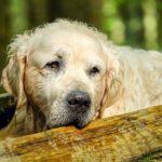 Hund hat Schnupfen – Was tun?